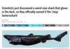 Shark Comp