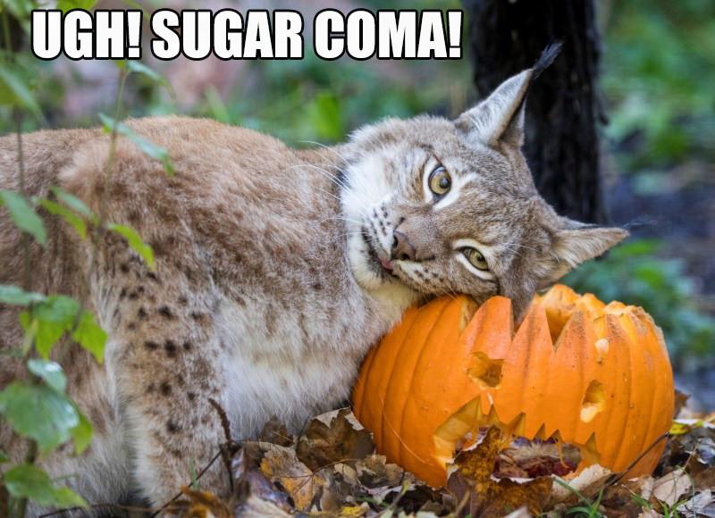 November 1st. .. This one has had waaaay too much skooma. hic cat sugar coma